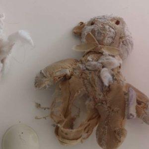 Doudou de Mélodie déchiqueté par son chien
